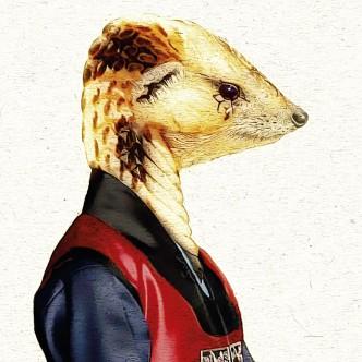 Portrait animalier, croisement mangouste et cobra