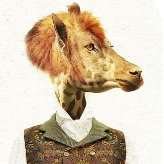 Portrait animalier, croisement girafe et lion
