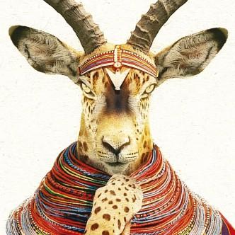 Portrait animalier, croisement gazelle et léopard