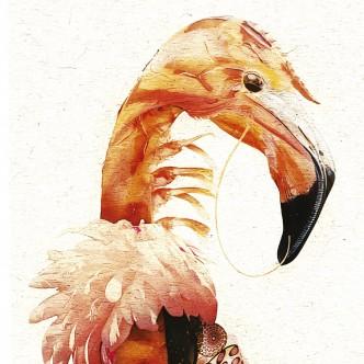 Portrait animalier, croisement crevette et flamand rose